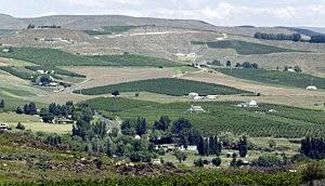 Washington Orchard in Yakima Valley