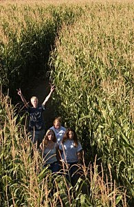 Corn Maze in action