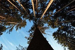 Marijuana Growing Operations Hurting Forests
