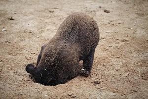 black bear tours LA suburb
