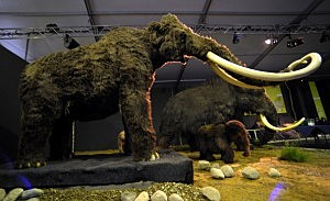 mammoth display