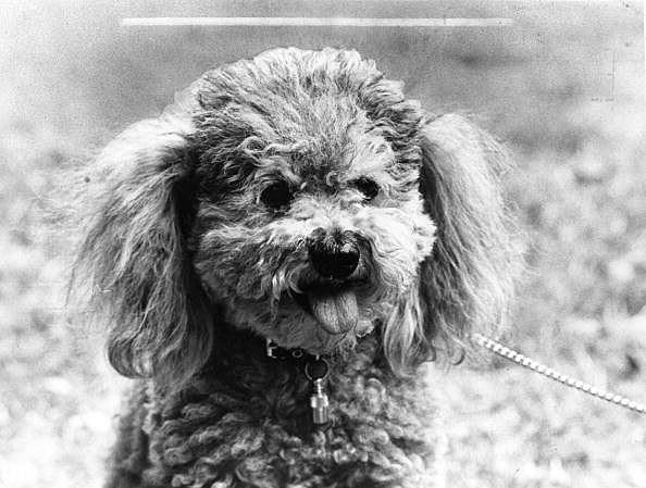 dead dog receives voter registration forms