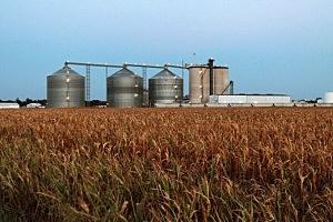 7 million worth of pot found in Idaho corn field