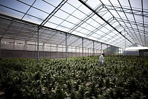 Perhaps what a Washington state pot farm will look like?