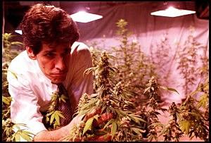 Congress officially gets medical marijuana bill