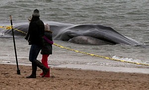 Dead whale washes up on Washington beach