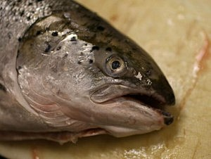 Salmon recovery board budget is 220 plus million