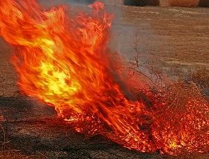 burning tumbleweeds