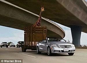 Giraffe scene from Hangover III